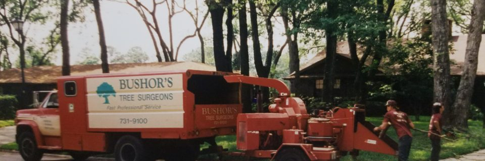 Providing quality tree care since 1962