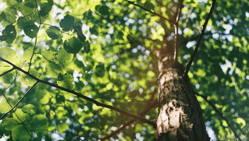 How a Drought Can Affect Your Trees