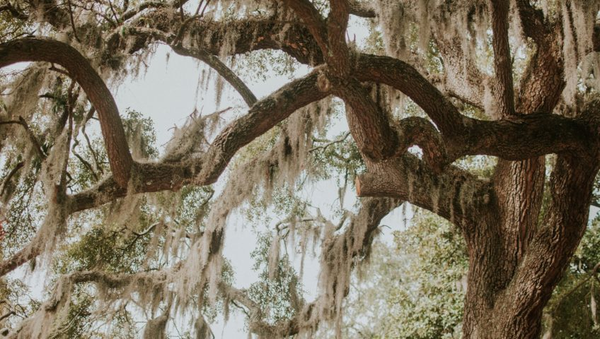 What Can You Do If Tree Branches Are Hanging Over Your Home?