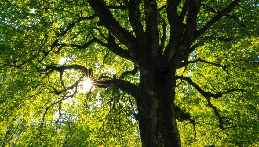 4 Ways to Tell a Tree is Unhealthy