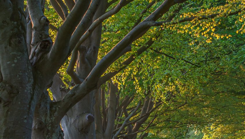 How to Tell Your Tree Has Structural Damage