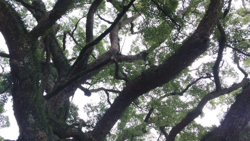 Winter Tree Maintenance Tips from a Jacksonville Tree Care Specialist