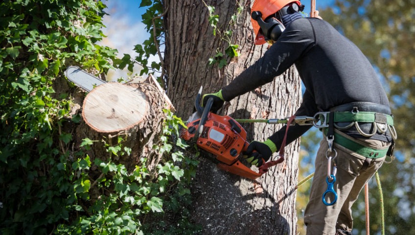 Reasons to Consider Tree Removal