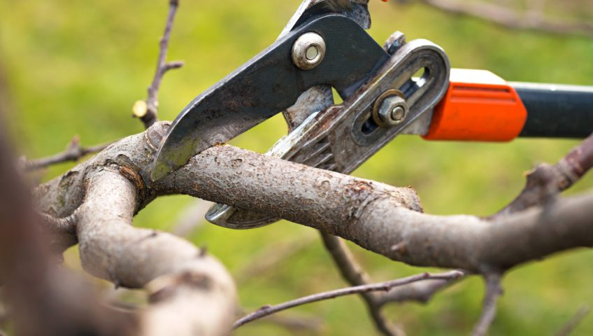 How often should you trim your tree?