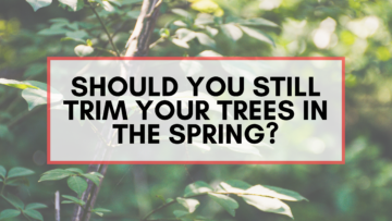Safely trim your trees in the spring